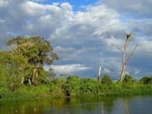 Rurrenabaque : entre jungle et pampa