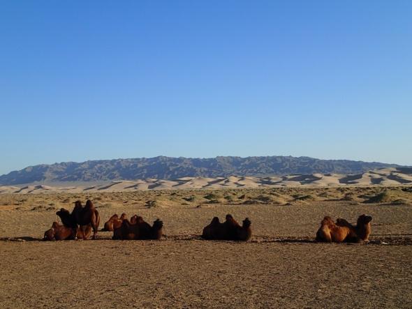Les dunes de Khongoryn Els
