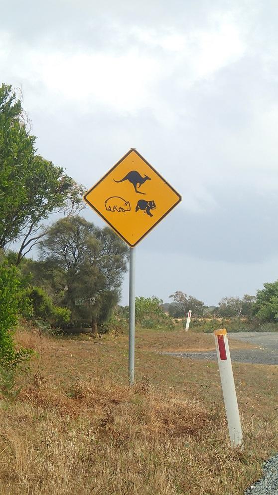 Australie : des animaux sur des panneaux