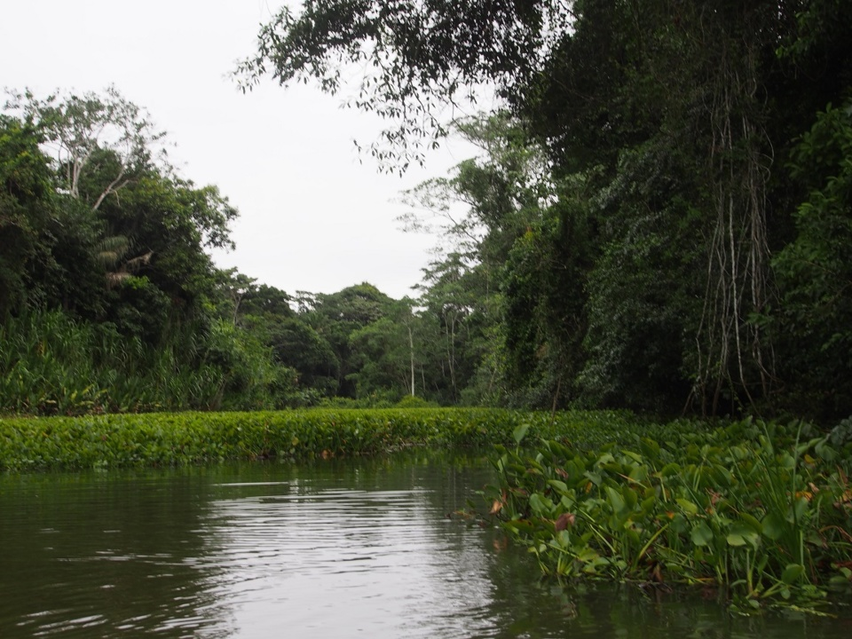 Rurrenabaque : entre jungle et pampa