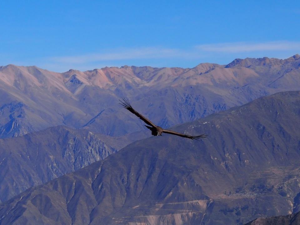 Arequipa, l'autre ville blanche